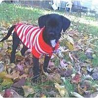 Adopt A Pet :: Mr Bubbles - Raymond, NH