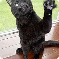 Adopt A Pet :: Martin - Xenia, OH