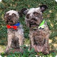 Adopt A Pet :: Coco & Chanel - Austin, TX
