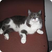 Adopt A Pet :: Gracie - Laguna Woods, CA