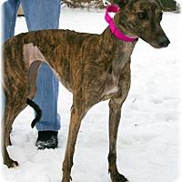 Adopt A Pet :: Bella - Harrisburg, PA