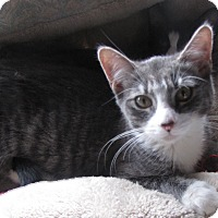 Adopt A Pet :: Chevy - Berkeley Hts, NJ