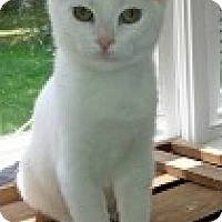 Adopt A Pet :: Eli - McHenry, IL
