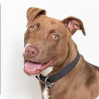 Adopt A Pet :: Blaze - San Luis Obispo, CA