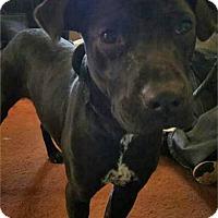 Adopt A Pet :: Junior - Troy, MI