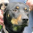 Adopt A Pet :: Zen