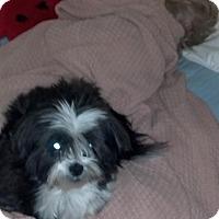 Adopt A Pet :: Barney - Alden, NY