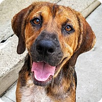 Adopt A Pet :: Sally*Family dog!* - Chicago, IL