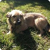 Terrier (Unknown Type, Medium) Mix Dog for adoption in Tijeras, New Mexico - Grizzy