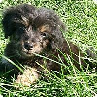 Adopt A Pet :: I'M ADOPTED 7 Dwarfs