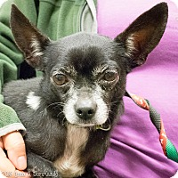 Adopt A Pet :: Toby - Loudonville, NY