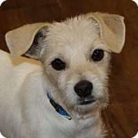 Jack Russell Terrier Mix Puppy for adoption in Prosser, Washington - Friday
