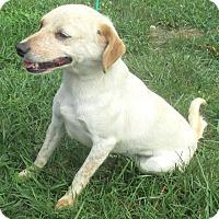 Adopt A Pet :: Dana - Reeds Spring, MO