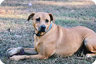 Terrier (Unknown Type, Small) Dog for adoption in Ruston, Louisiana - Cookie