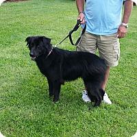 Adopt A Pet :: October - Cameron, MO