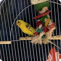 Adopt A Pet :: Sunny - Hyde Park, NY