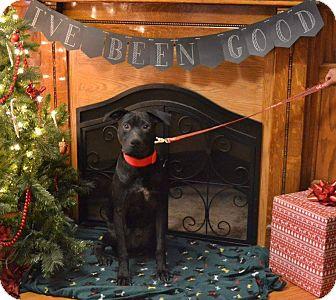Labrador Retriever Mix Puppy for adoption in Huntington, Indiana - Nugget