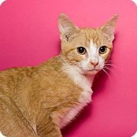 Adopt A Pet :: William - Jersey City, NJ