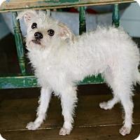 Adopt A Pet :: Nelson - San Antonio, TX