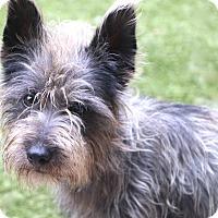 Adopt A Pet :: Jefferson - Bedminster, NJ