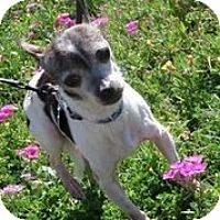Adopt A Pet :: Bruiser - Austin, TX