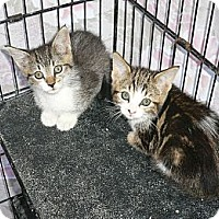 Adopt A Pet :: Kittens2 - Brea, CA