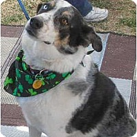Adopt A Pet :: Goose (ADOPTION PENDING) - Phoenix, AZ