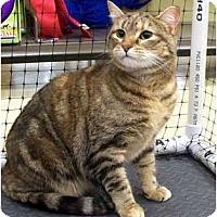 Adopt A Pet :: Ginger - Alexandria, VA