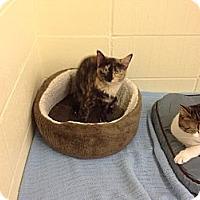 Adopt A Pet :: Baccaurat - Lake Charles, LA