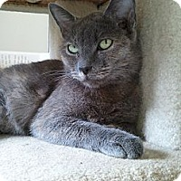Adopt A Pet :: Zira - Irvine, CA