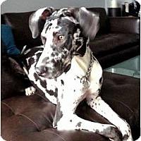 Adopt A Pet :: Myla - Secaucus, NJ