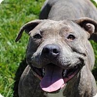 Adopt A Pet :: Carmen - Los Angeles, CA