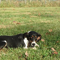 Adopt A Pet :: Emily - Pleasant Plain, OH