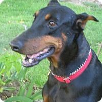 Adopt A Pet :: Katrina - Tracy, CA