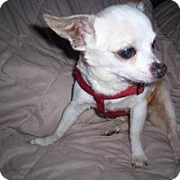 Adopt A Pet :: WYATT (LM) - Tampa, FL