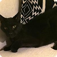 Adopt A Pet :: Terry - Addison, IL