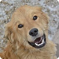 Adopt A Pet :: Jinx - Meridian, ID
