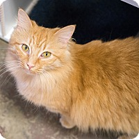 Adopt A Pet :: Teresa - Montclair, CA
