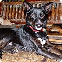 Adopt A Pet :: Gloria - Family Dog! - Los Angeles, CA