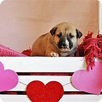 Adopt A Pet :: Marty - Waldorf, MD