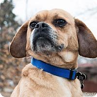 Adopt A Pet :: Carter - Bristol, CT