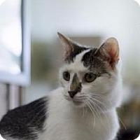 Adopt A Pet :: Leah - Columbus, OH