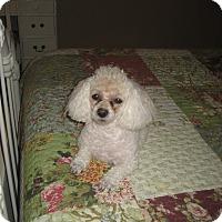 Adopt A Pet :: Kissie - Las Vegas, NV