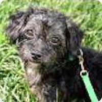 Adopt A Pet :: Parker - Austin, TX