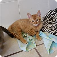 Adopt A Pet :: Lime - Chippewa Falls, WI