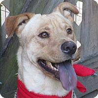 Adopt A Pet :: A - RIO - Augusta, ME