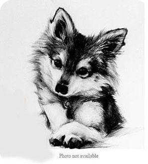 Pomeranian Mix Dog for adoption in San Bernardino, California - URGENT ON 10/22 San Bernardino