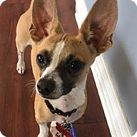 Adopt A Pet :: Riley - Redondo Beach, CA