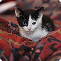 Adopt A Pet :: Enid - Brooklyn, NY
