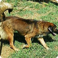Adopt A Pet :: Bentley - Oswego, IL
